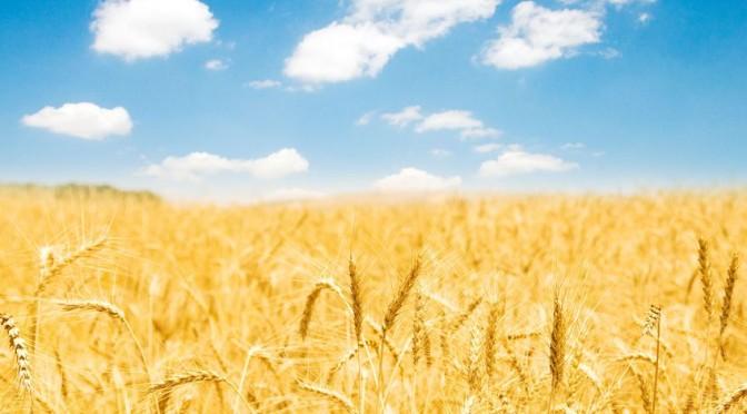 Guds rikes naturlover – Del 5: Så og høste!